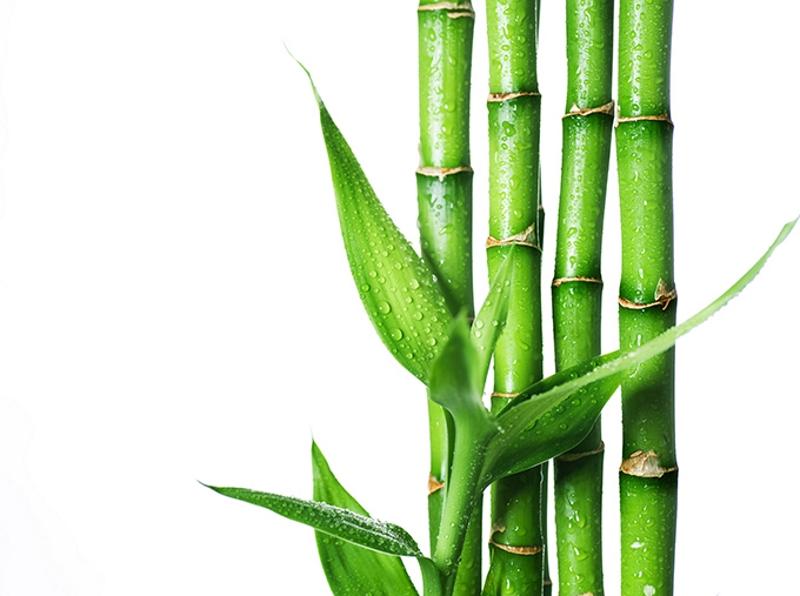 Аксессуары: использование бамбука в интерьере