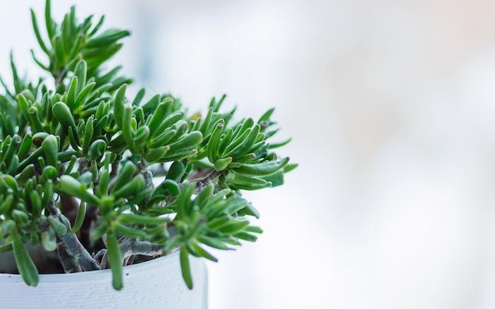 Комнатные растения как часть стиля современного жилого интерьера